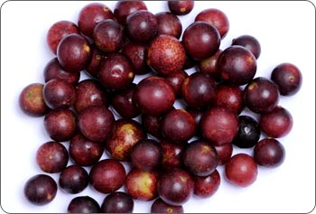 fresh camu camu fruit