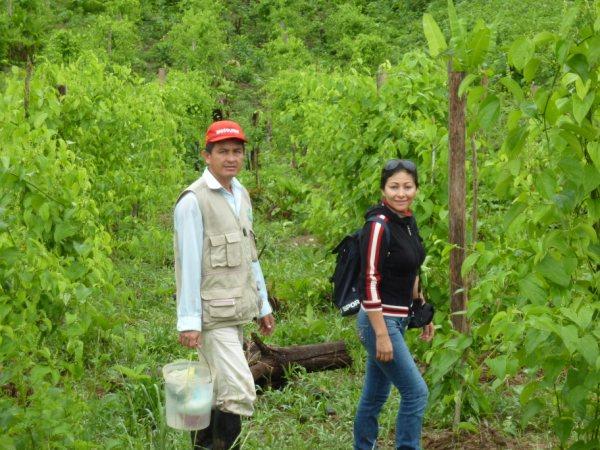 how to grow sacha inchi plants
