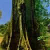Visit the Amazon with Eco Ola